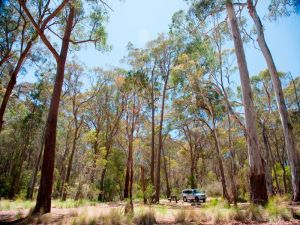 Coolah Tops National Park Camping - Tourism Bookings WA