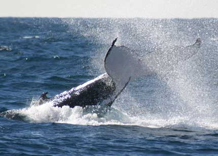 Whale Watching Sydney - Tourism Bookings WA