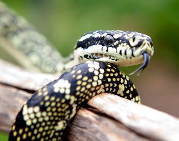 Reptile Encounters - Tourism Bookings WA