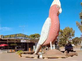 The Big Galah - Tourism Bookings WA