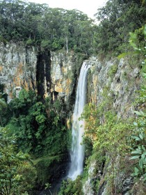 Gondwana Rainforests of Australia - Tourism Bookings WA