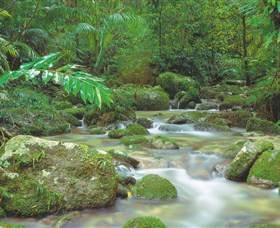 Mossman Gorge Daintree National Park - Tourism Bookings WA