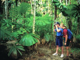 Mount Sorrow Ridge Trail Daintree National Park - Tourism Bookings WA