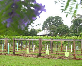 Douglas Vale Historic Homestead  Vineyard