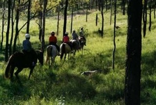 Hunter Valley Horse Riding and Adventures - Tourism Bookings WA