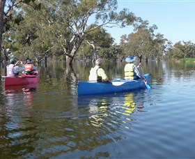 Doodle Cooma Swamp - Tourism Bookings WA