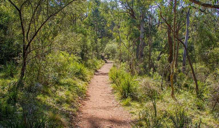 Mares Forest Creek walking track
