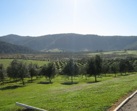 Hastings Valley Olives - Tourism Bookings WA