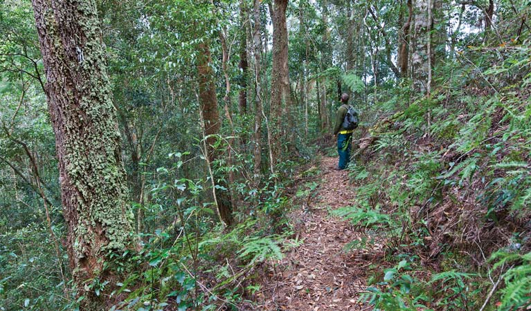 Blackbutt walking track - Tourism Bookings WA