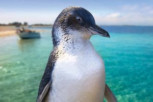 Full-Day Penguin Island  Fremantle Town - Tourism Bookings WA