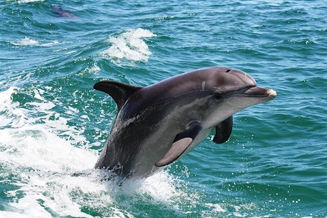 Half-Day Mandurah Canals  Dolphin Watch Tour - Tourism Bookings WA