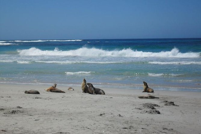 Kangaroo Island in a Day Tour from Adelaide - Tourism Bookings WA