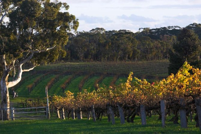 Barossa Valley with Hahndorf Tour from Adelaide - Tourism Bookings WA