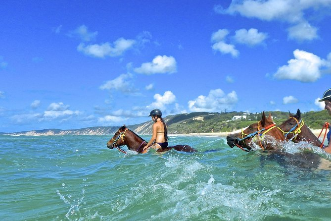 Horse Swimming Ride from Rainbow Beach - Tourism Bookings WA