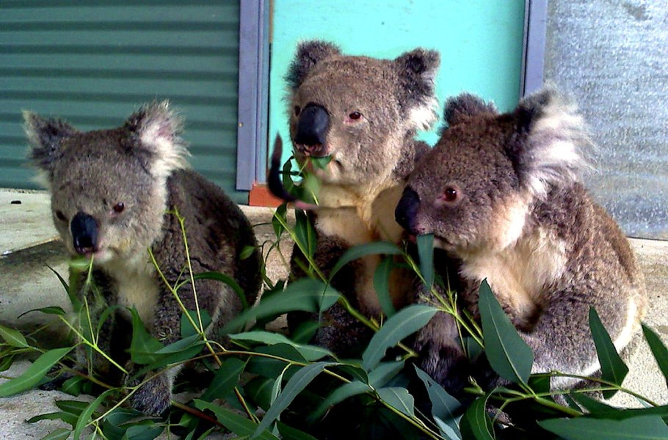 Cohunu Koala Park - Tourism Bookings WA