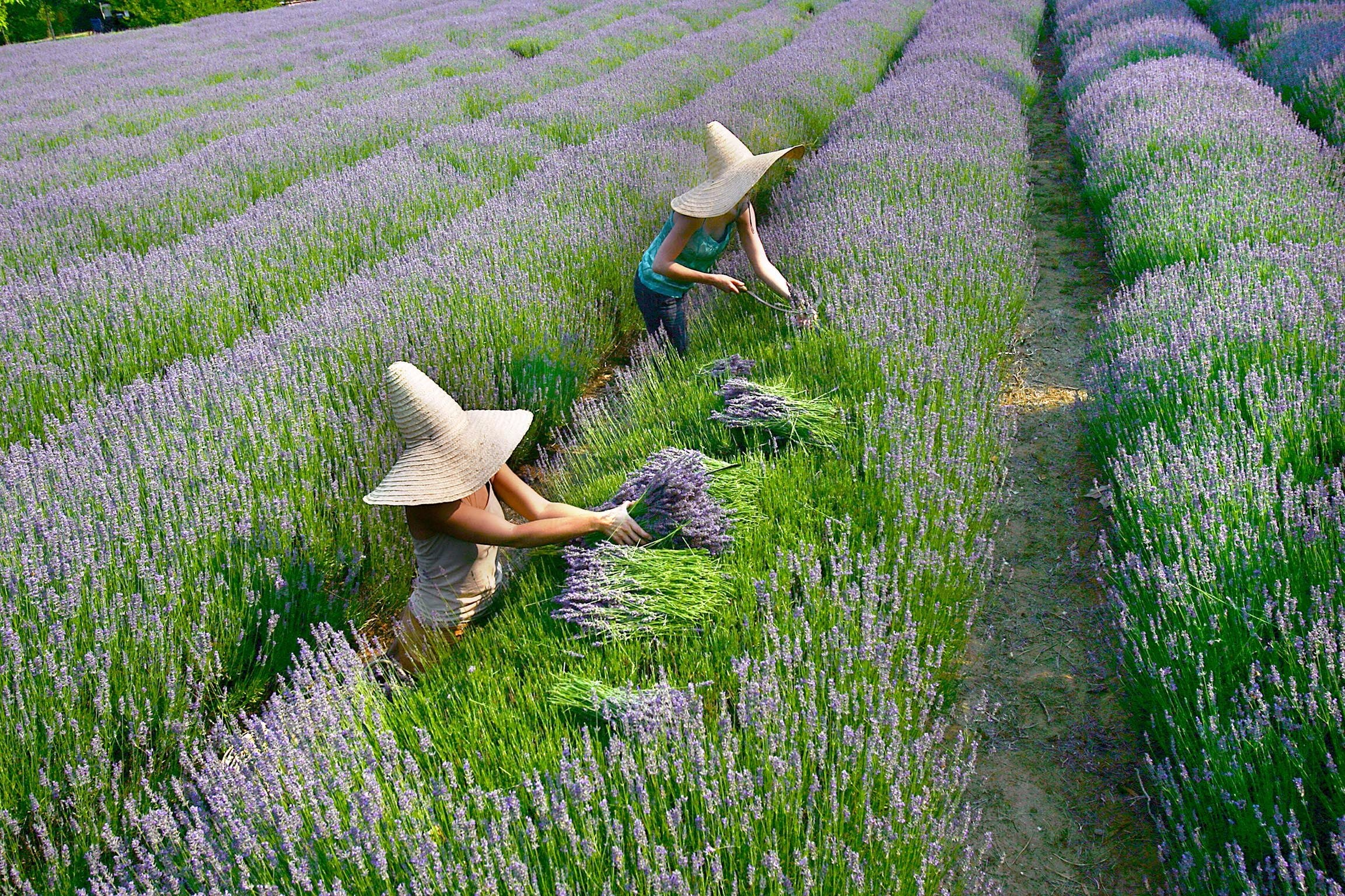 Lavandula Swiss Italian Farm - Tourism Bookings WA