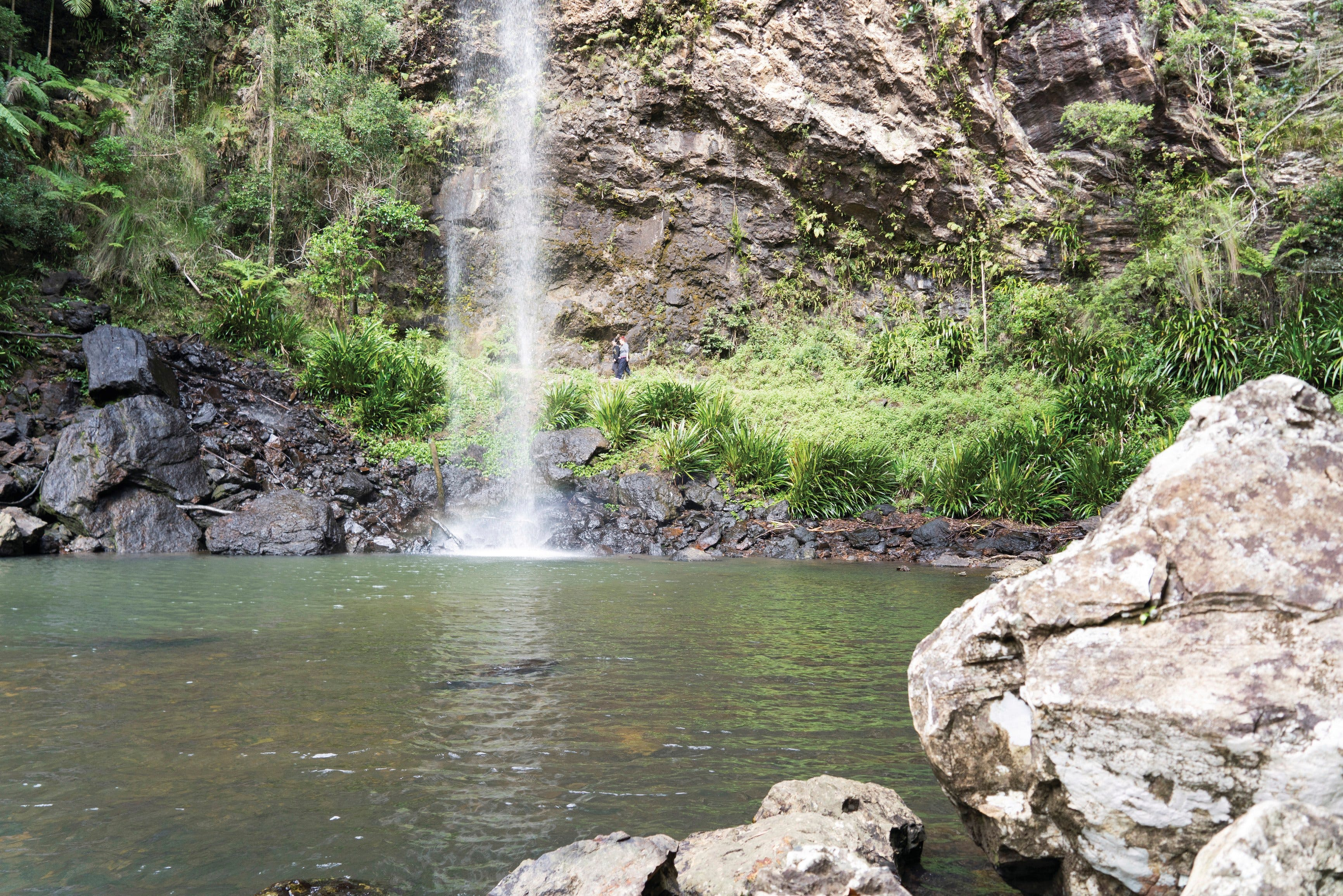 Twin Falls Circuit Springbrook National Park - Tourism Bookings WA