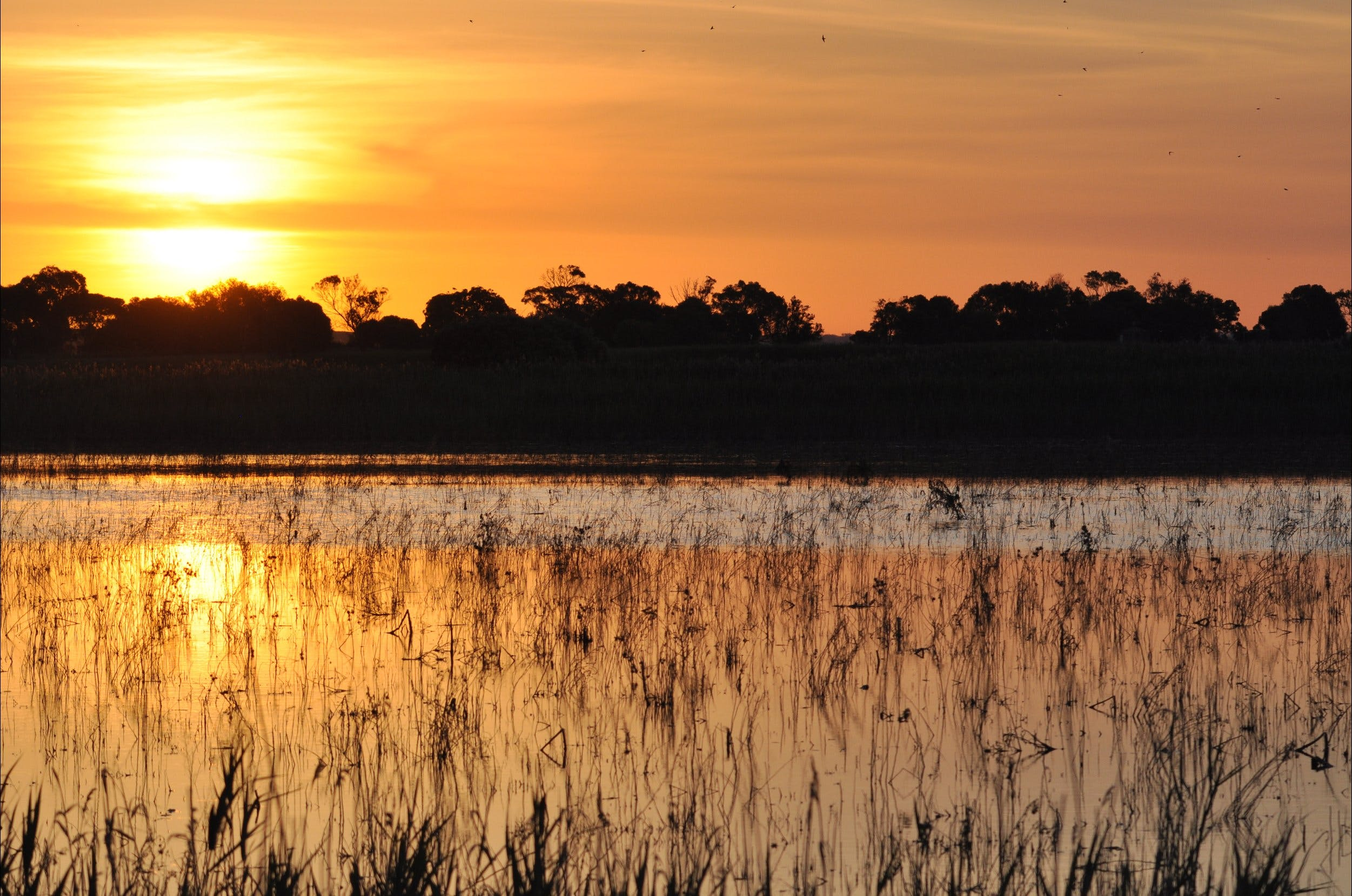 Bool Lagoon Game Reserve and Hacks Lagoon Conservation Park - Tourism Bookings WA