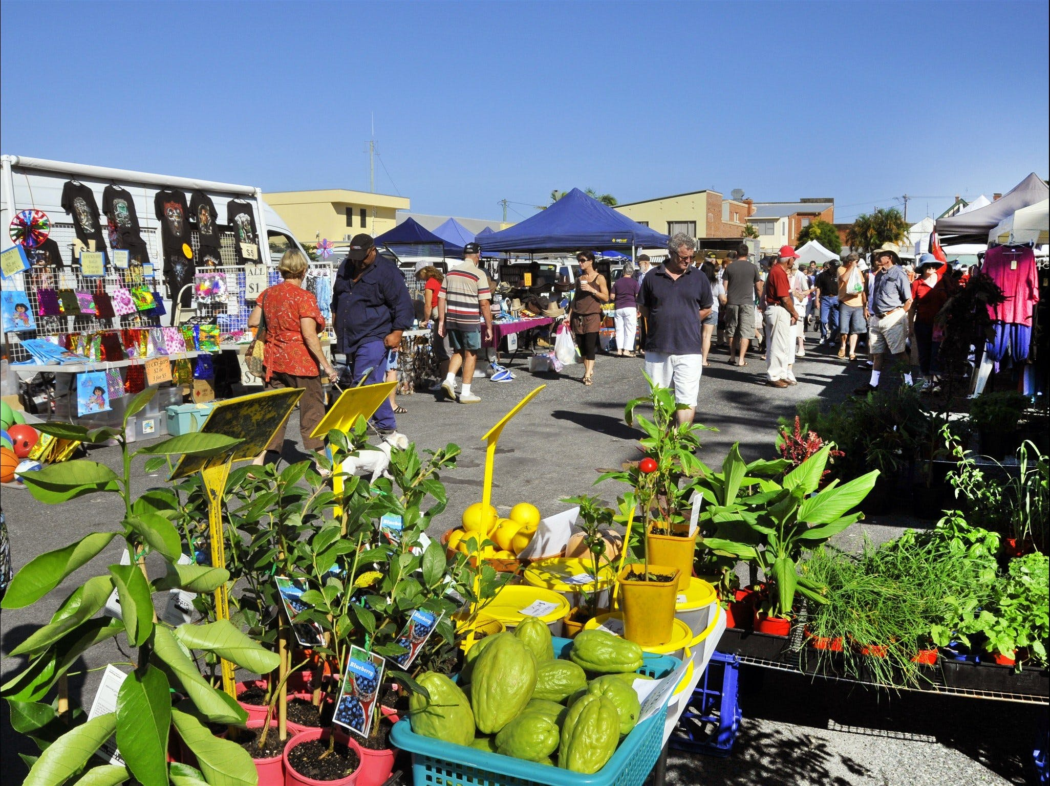 Maclean Community Monthly Markets - Tourism Bookings WA