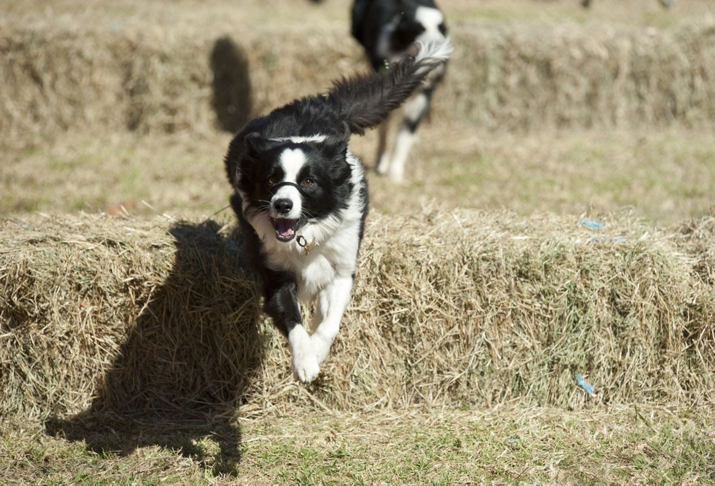 Great Nundle Dog Race - Tourism Bookings WA
